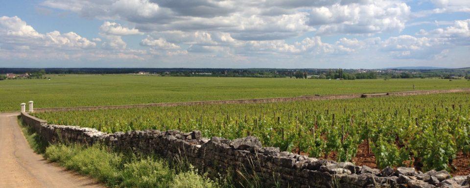 Exploring Burgundy